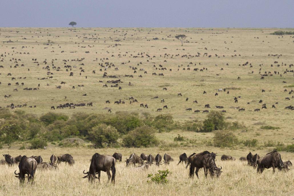 Branchi animali savana suolo desertificazione eberle