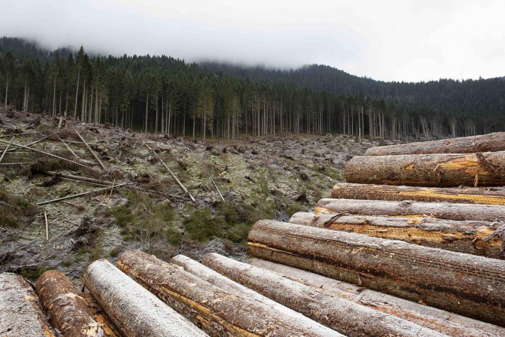 deforestazione eberle tronchi foreste alberi