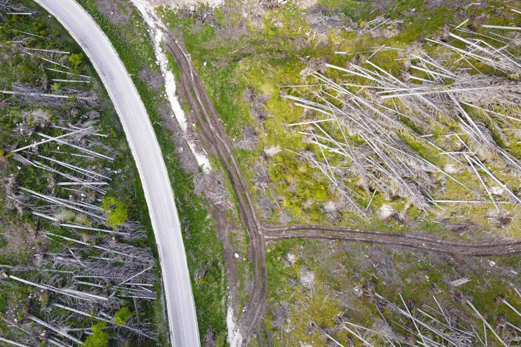 deforestazione eberle tronchi foreste alberi ecosistemi biodiversità cambiamenti climatici erosione