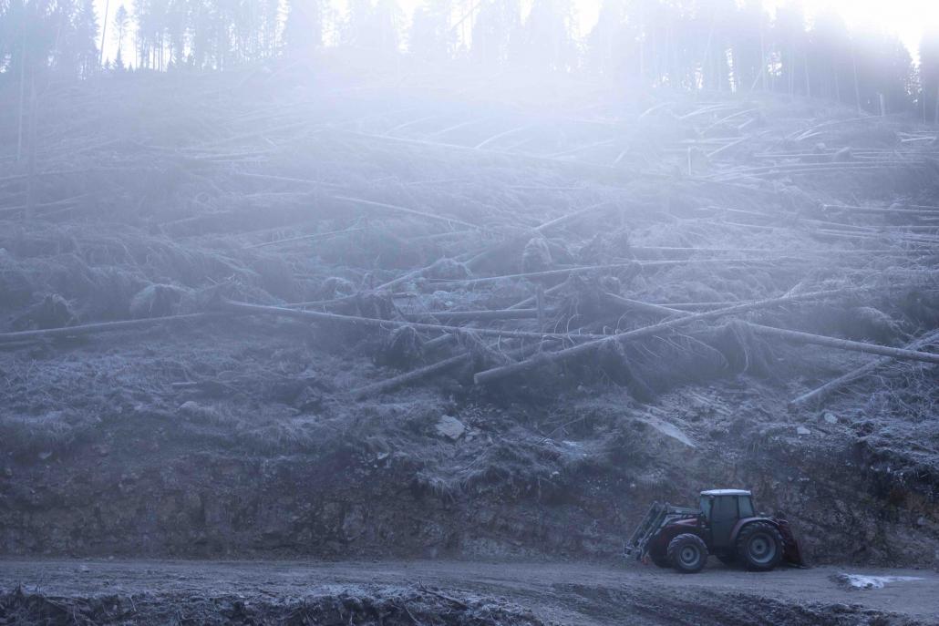 deforestazione eberle tronchi foreste alberi ecosistemi biodiversità cambiamenti climatici erosione suolo