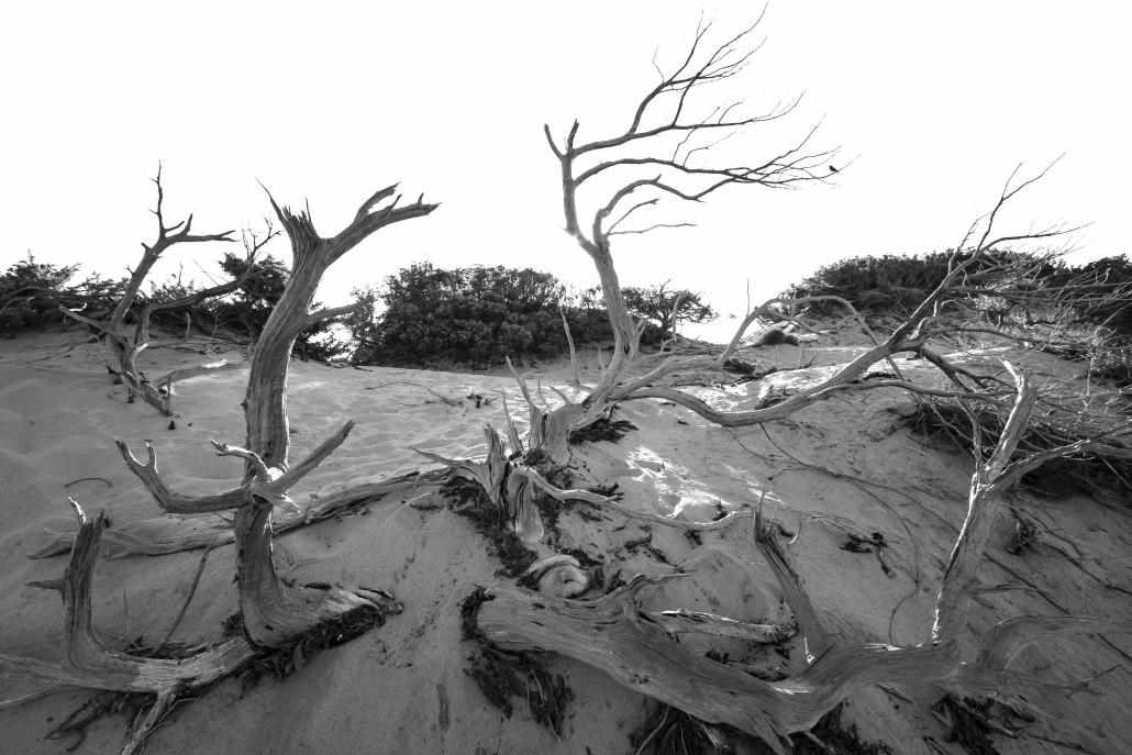 desertificazione, erosione, perdita sostanza organica, suolo