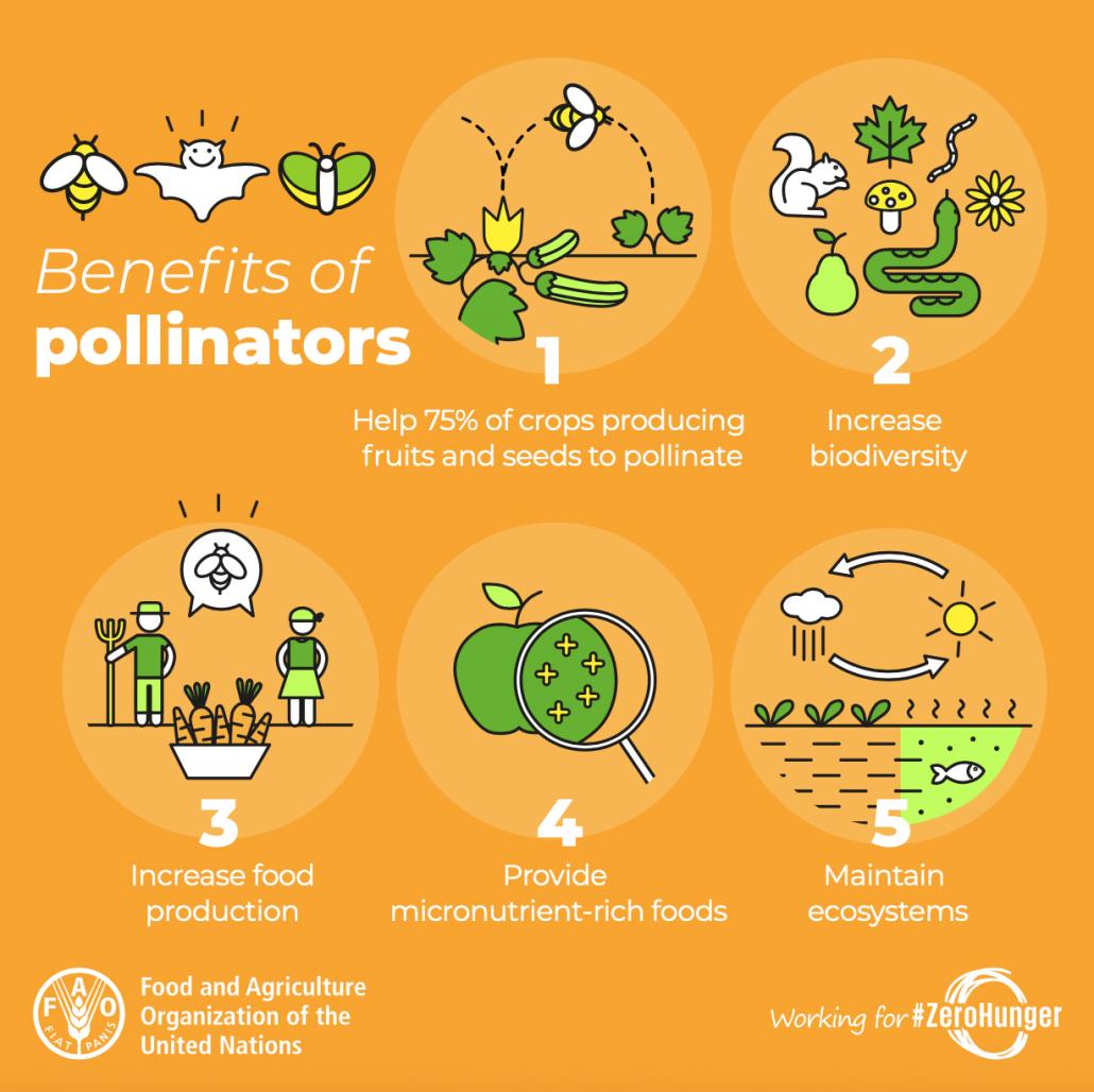 api insetti impollinatori servizi ecosistemici vantaggi agricoltura