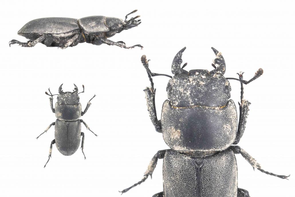 suolo ecosistemi biodiversità insetti sottosuolo