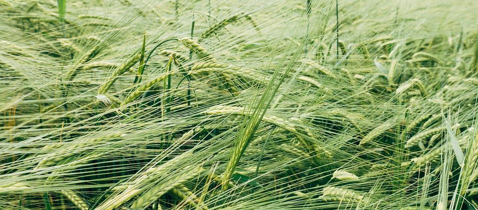La Commissione Europea pensa all'introduzione di un mercato del carbonio per premiare le pratiche agricole rispettose del clima. Foto: Markus Winkler Pixabay License Free for commercial use No attribution required