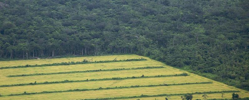 In Amazzonia l'agricoltura su larga scala produce un calo delle precipitazioni alimentando il riscaldamento della superficie. Foto: Sam Beebe Attribution 2.0 Generic (CC BY 2.0)