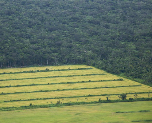 In the Amazon, large-scale agriculture is reducing rainfall volumes and fueling surface warming. Photo: Sam Beebe Attribution 2.0 Generic (CC BY 2.0)