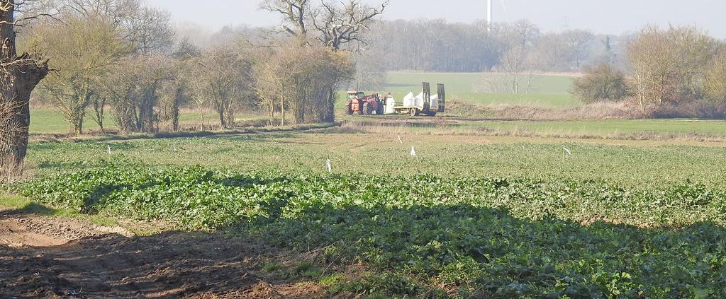 Fattore essenziale per la crescita delle piante ma anche potenziale fonte di inquinamento, l'azoto è impiegato in agricoltura come elemento base di molti fertilizzanti. Foto: Adrian S. Pye Attribution-ShareAlike 2.0 Generic (CC BY-SA 2.0)