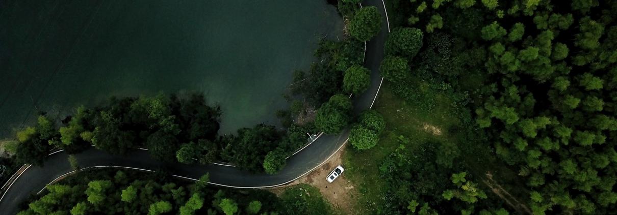 foreste alberi strade erosione carbonio CO2
