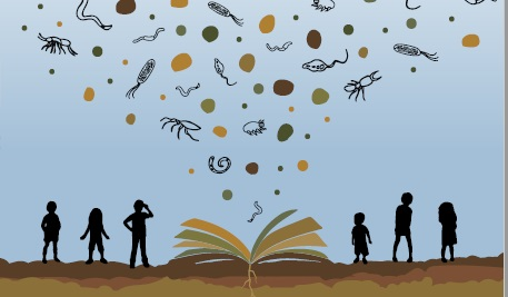 Biodiversity and soil diversity are featured in FAO's book project. Image: FAO Attribution-NonCommercial-ShareAlike 3.0 IGO (CC BY-NC-SA 3.0 IGO)
