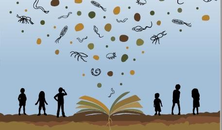 La biodiversità e la ricchezza del suolo protagoniste del progetto editoriale della FAO. Immagine: FAO Attribution-NonCommercial-ShareAlike 3.0 IGO (CC BY-NC-SA 3.0 IGO)