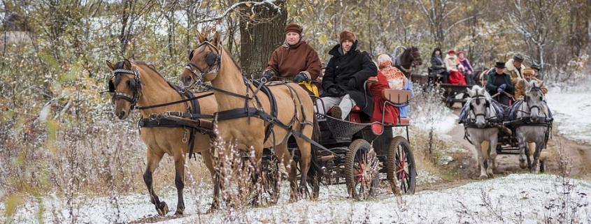 La Russia ospita 640 miliardi di alberi e un quinto delle foreste del Pianeta. Foto: John Kopiski Pixabay License Libera per usi commerciali Attribuzione non richiesta