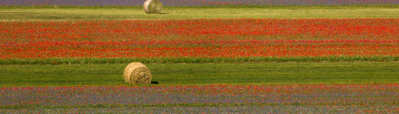 ambiente clima suolo agricoltura bioeconomia