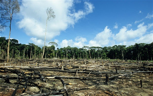 Last year, the Guardian claims, UK banks' support to companies involved in deforestation amounted to £900 million. Photo: Dikshajhingan Attribution-ShareAlike 4.0 International (CC BY-SA 4.0)