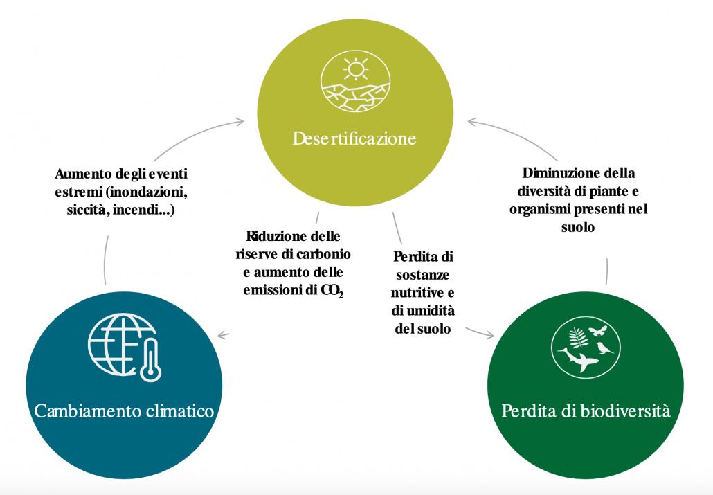 """Rapporto fra desertificazione, perdita di biodiversità e cambiamento climatico. FONTE: Corte dei conti europea, sulla base del testo del World Resources Institute, intitolato """"Ecosystems and Human Well-being: Desertification Synthesis"""", 2005, pag. 17."""