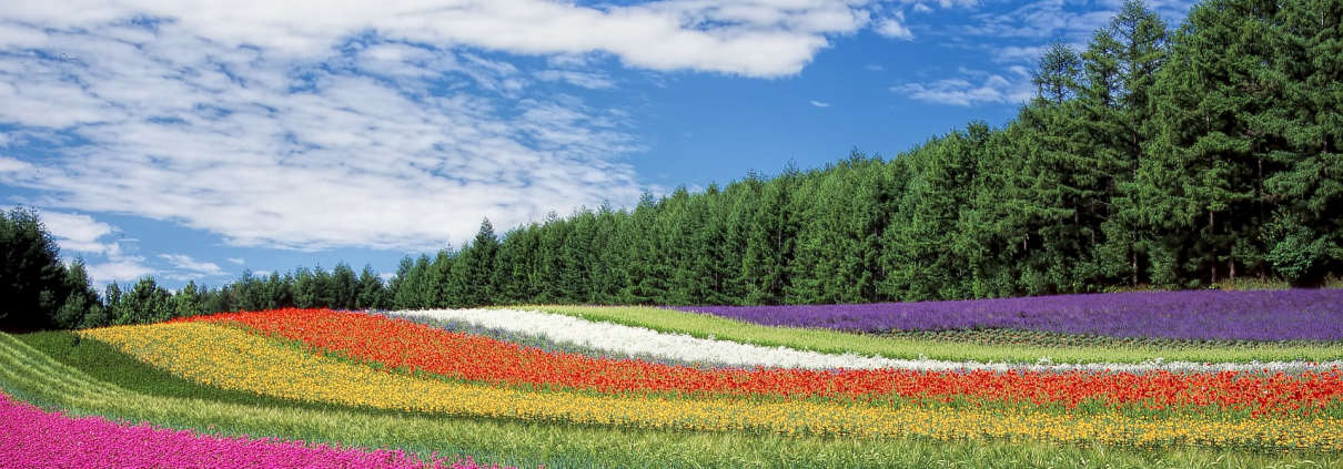 biodiversity, climate, environment, soil