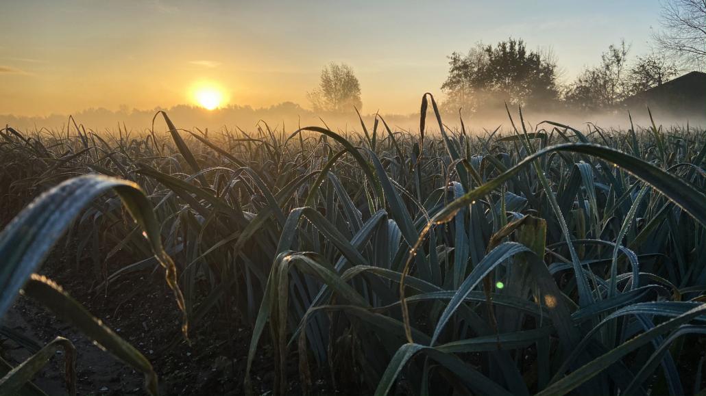 suolo innovazione fertilizzanti grow installazione luminosa