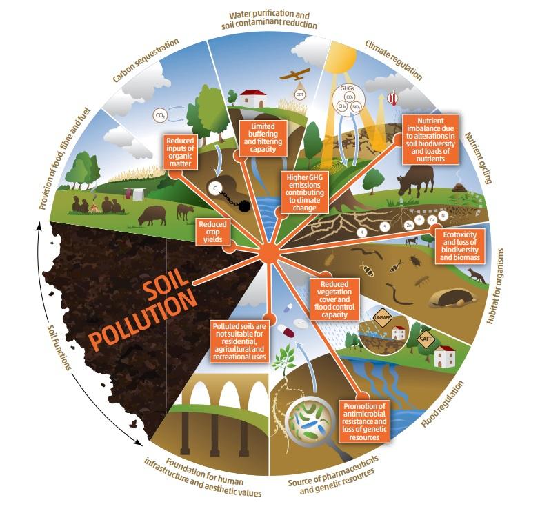 L'inquinamento del suolo provoca la riduzione e infine la perdita di servizi ecosistemici. Immagine: FAO and UNEP. 2021. Global assessment of soil pollution - Summary for policy makers. Rome, FAO, 2021 https://doi.org/10.4060/cb4827en. © FAO, 2021 Creative Commons Attribution-NonCommercial-ShareAlike 3.0 IGO licence (CC BYNC-SA 3.0 IGO; https://creativecommons.org/licenses/by-nc-sa/3.0/igo/legalcode/legalcode).