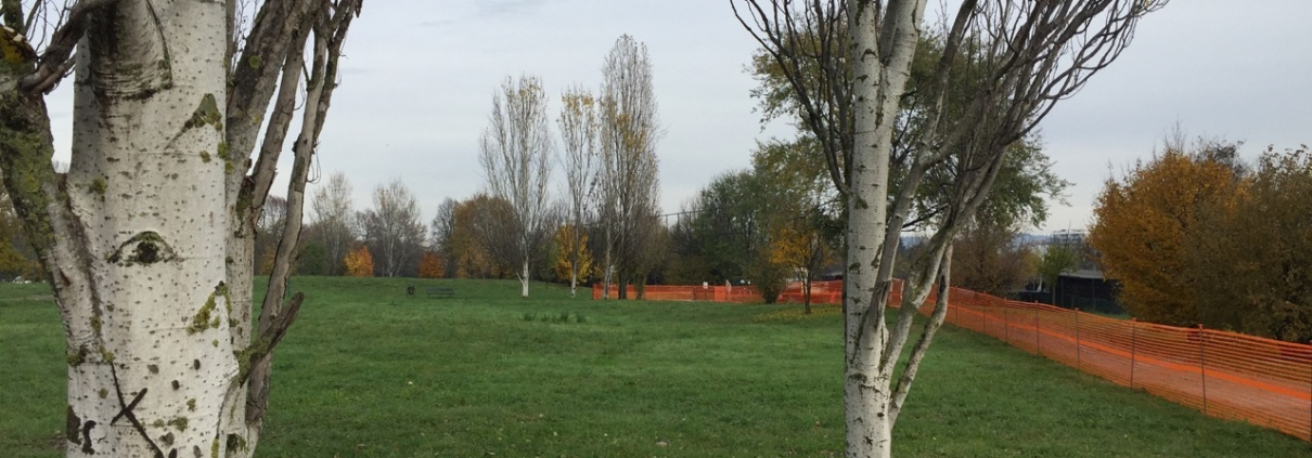 Il progetto new soil apre prospettive molto ampie per le città italiane ed europee. Foto: Comune di Torino