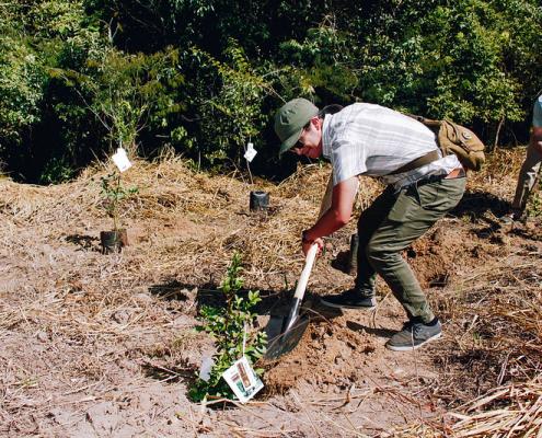 Il ripristino del terreno è essenziale per prevenire il collasso degli ecosistemi. Foto: Raquel Maia Arvelos/CIFOR Attribution-NonCommercial-ShareAlike 2.0 Generic (CC BY-NC-SA 2.0)