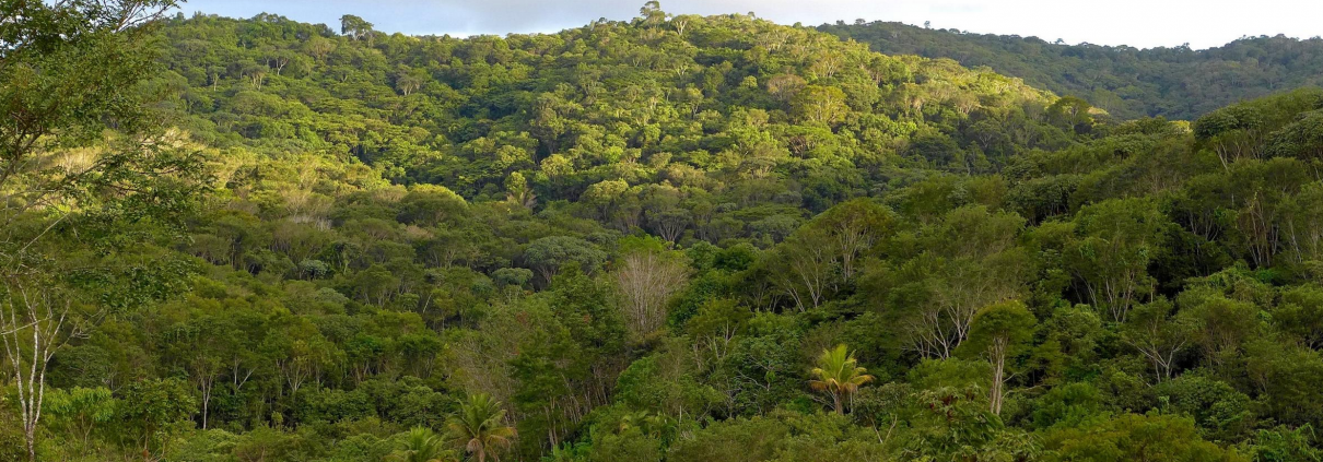 Serra do Urubu, uno degli ultimi resti significativi della Foresta Atlantica nel nord-est del Brasile. FOTO: Marc Egger, SAVE Brasile.