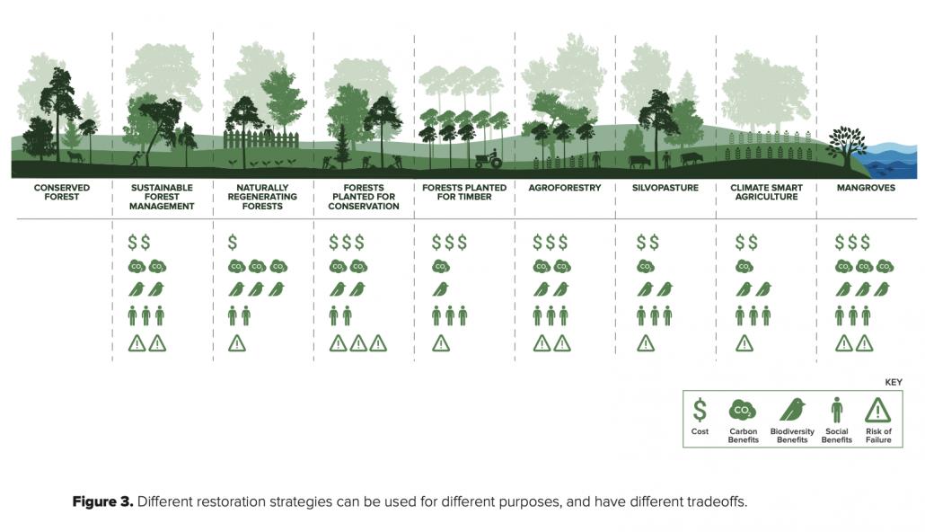Strategie di ripristino a confronto, con relativi costi, rischi di fallimento e benefici sociali, di sequestro di carbonio e tutela della biodiversità FONTE: R. Crouzeilles et al. 2020.