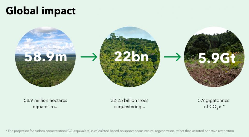 effetto della rigenerazione forestale negli ultimi 20 anni