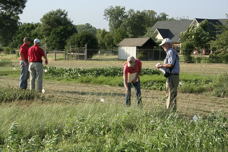 There is a clear link between the development of sustainable agriculture and a healthy diet, FAO says. Photo: UGA CAES/Extension Attribution-NonCommercial 2.0 Generic (CC BY-NC 2.0)