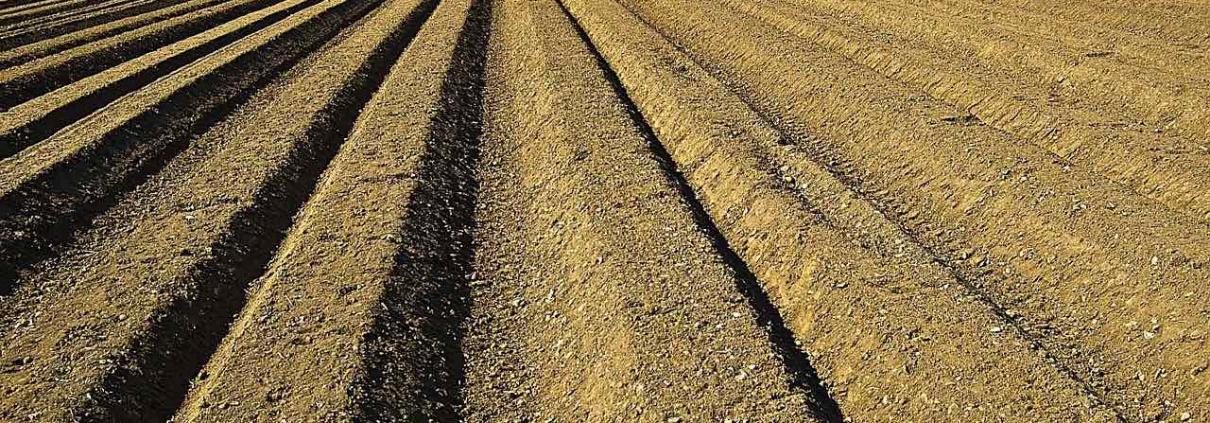 Il contenuto in sostanza organica dei terreni agricoli europei si è progressivamente ridotto.