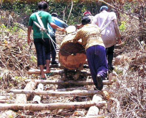 Riau, Indonesia. Nella nazione asiatica, secondo le stime, l'illegalità condiziona non meno del 40% del mercato locale del legname. Foto: Romain Pirard/CIFOR Attribution-NonCommercial-NoDerivs 2.0 Generic (CC BY-NC-ND 2.0)