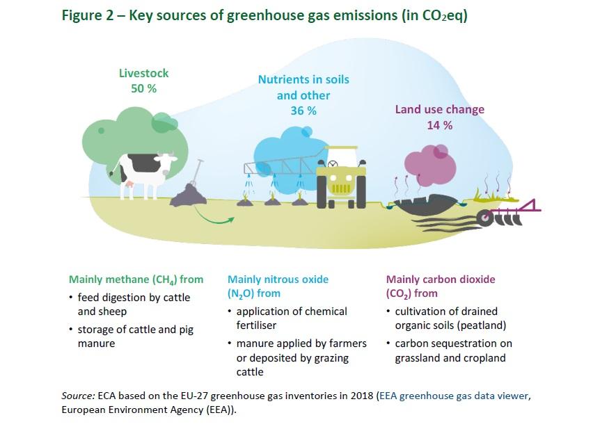 Il settore dell'allevamento è responsabile del 50% delle emissioni del comparto agricolo. Immagine: Corte dei conti europea (European Court of Auditors) su dati Agenzia europea dell'Ambiente (European Environment Agency) Attribution 4.0 International (CC BY 4.0)