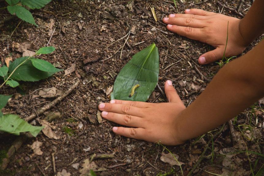Il suolo è un mondo complesso ma accessibile a tutti. Immagine: libreshot.com commercial use. No attribution required. Public domain license