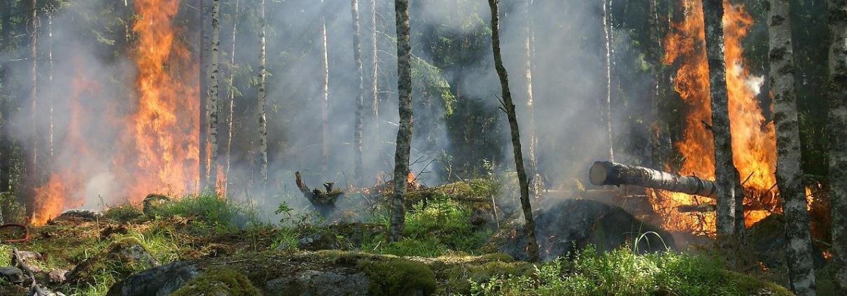 incendi boschivi foreste