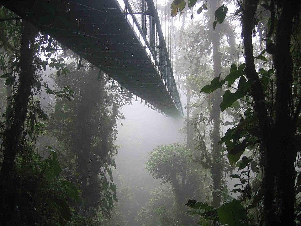 foresta nebulosa tropicale Costa Rica