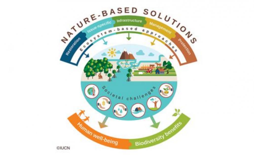 Le Nature based Solutions sono di azioni ispirate, supportate o mutuate dalla natura. Il concetto, relativamente recente, è stato utilizzato dalla Commissione UE per identificare strategie, azioni, interventi, basati sulla natura capaci di fornire servizi ambientali e vantaggi socio-economici in grado, se svolti in contesto urbano, di aumentare la resilienza delle città. FONTE: IUCN.