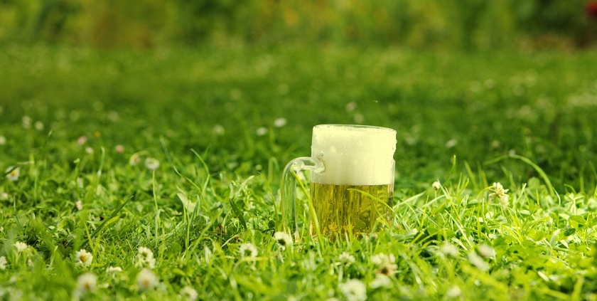 Beer waste can help eliminate parasitic microorganisms in the soil promoting agricultural yield growth. Photo: CC0 Public Domain Free for personal and commercial use No attribution
