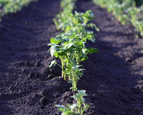 Il sistema di produzione del cibo, sostiene l'ultimo rapporto della Ellen MacArthur Foundation, può essere riprogettato per far prosperare la natura Foto: Pixabay Libera per usi commerciali Attribuzione non richiesta