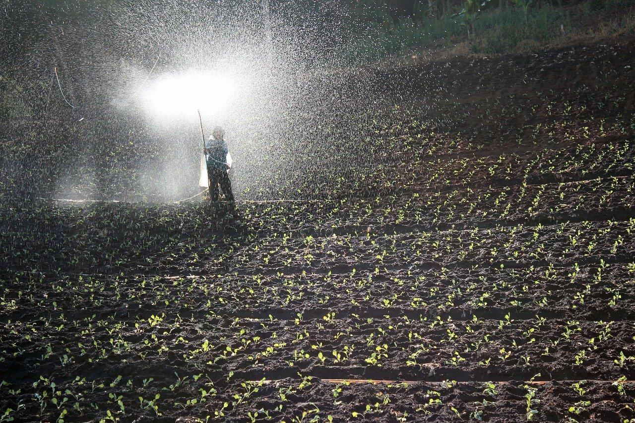 Un rapporto UNEP-Chatman House ha rivelato che agricoltura e allevamenti intensivi da soli minacciano l'86% delle specie a rischio di estinzione (24mila su 28mila). FOTO: Foto di Peggy und Marco Lachmann-Anke da Pixabay