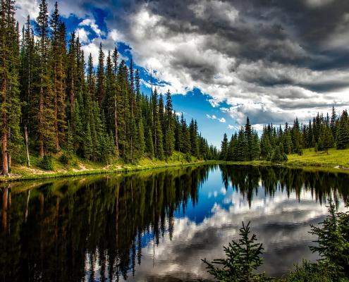 foreste acqua servizi ecosistemici biodiversità