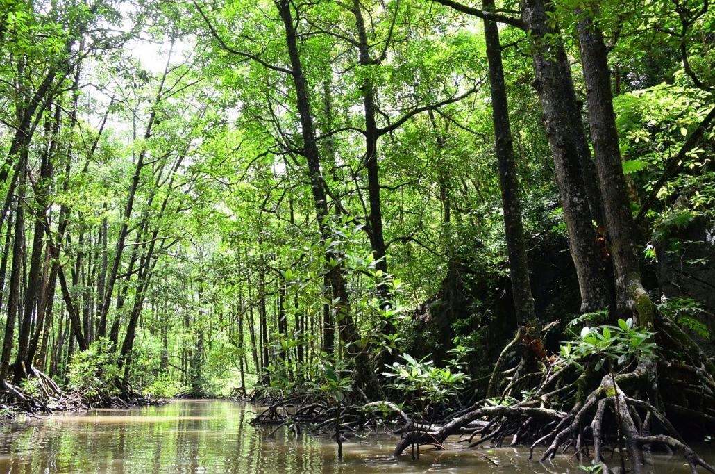 mangrovie acqua filippine fiumi