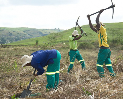 Land and ecosystem restoration is a key strategy for achieving the Sustainable Development Goals, UN says. Photo: Douwes Attribution-ShareAlike 4.0 International (CC BY-SA 4.0)