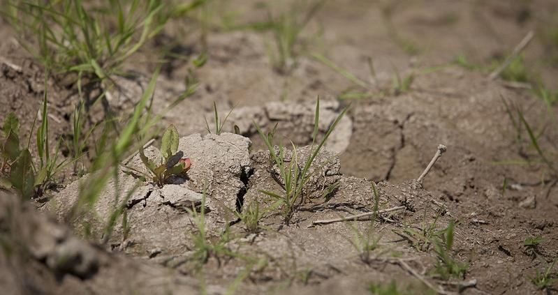 Nel mondo, sostiene la FAO, l'eccesso di sale interessa 11 milioni di chilometri quadrati di suolo. Foto: Milo Mitchell, IFPRI. Attribution-NonCommercial-NoDerivs 2.0 Generic (CC BY-NC-ND 2.0)