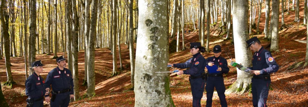 L'Inventario Nazionale delle Foreste e dei serbatoi forestali di Carbonio (INFC) è un'indagine campionaria periodica finalizzata alla conoscenza della qualità e quantità delle risorse forestali del Paese, fonte di statistiche forestali a livello nazionale e regionale. INFC è uno strumento di monitoraggio che produce conoscenza concreta a supporto della politica forestale e ambientale realizzato dall'Arma dei Carabinieri tramite il Comando Unità Forestali Ambientali e Agroalimentari in collaborazione con partner scientifico il CREA (Consiglio per la ricerca in agricoltura e l'analisi per l'economia agraria) e il contributo dei Corpi Forestali delle Regioni e Province Autonome. FOTO: Carabinieri Forestali 2021.