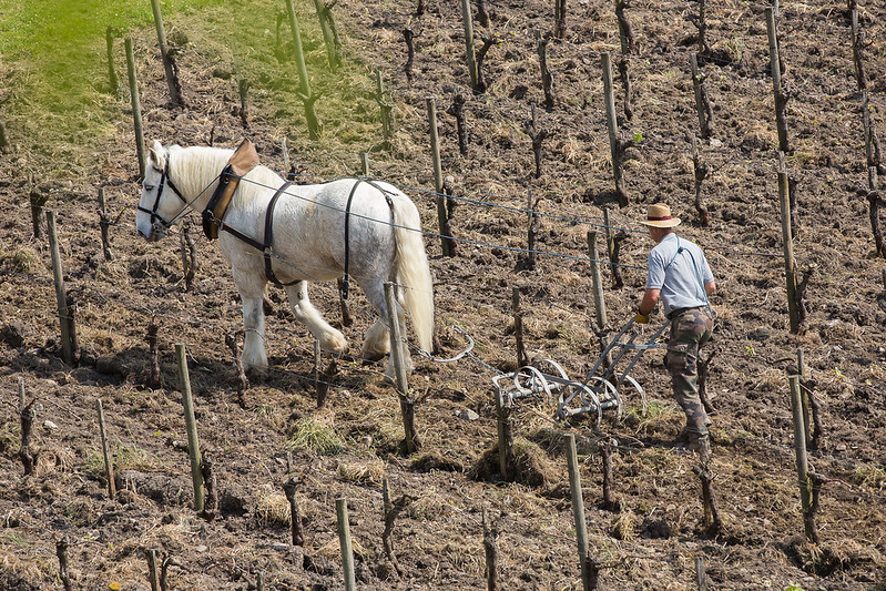 The use of horses in tillage operations helps to ensure soil health. Photo: Blaye Côtes de Bordeaux Attribution-NoDerivs 2.0 Generic (CC BY-ND 2.0)