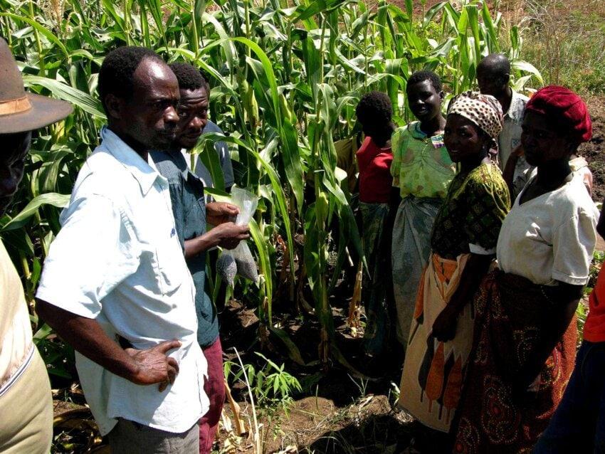 La determinazione della concentrazione di carbonio è decisiva per gli agricoltori del Malawi chiamati a massimizzare la fertilità dei loro suoli. Foto: USAID Free to use CC0