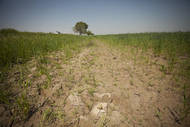 Eccesso di sale nei terreni della regione di Syrdaryo, nell'Uzbekistan orientale. L'ex repubblica sovietica è uno dei Paesi più colpiti dal fenomeno della salinizzazione del suolo. Foto: Milo Mitchell Attribution-NonCommercial-NoDerivs 2.0 Generic (CC BY-NC-ND 2.0)
